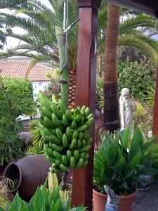 Finca La Puerta de Alcala - Ökologischer Garten